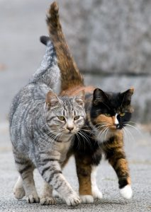 CatPartners