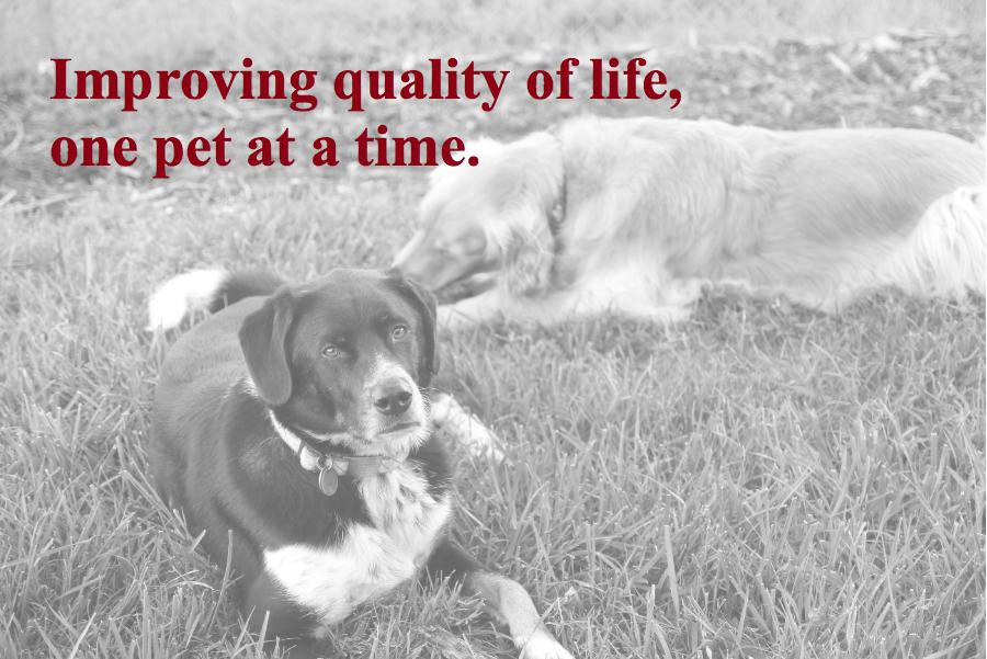 dogs_slogan